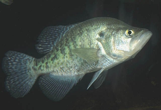 How To Catch Crappie In Muddy Water